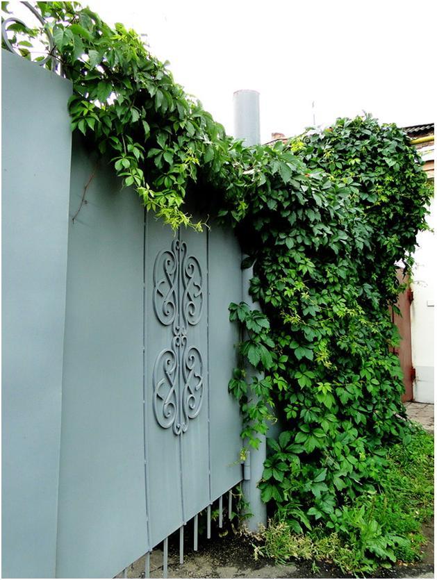 Зеленое ограждение во дворе